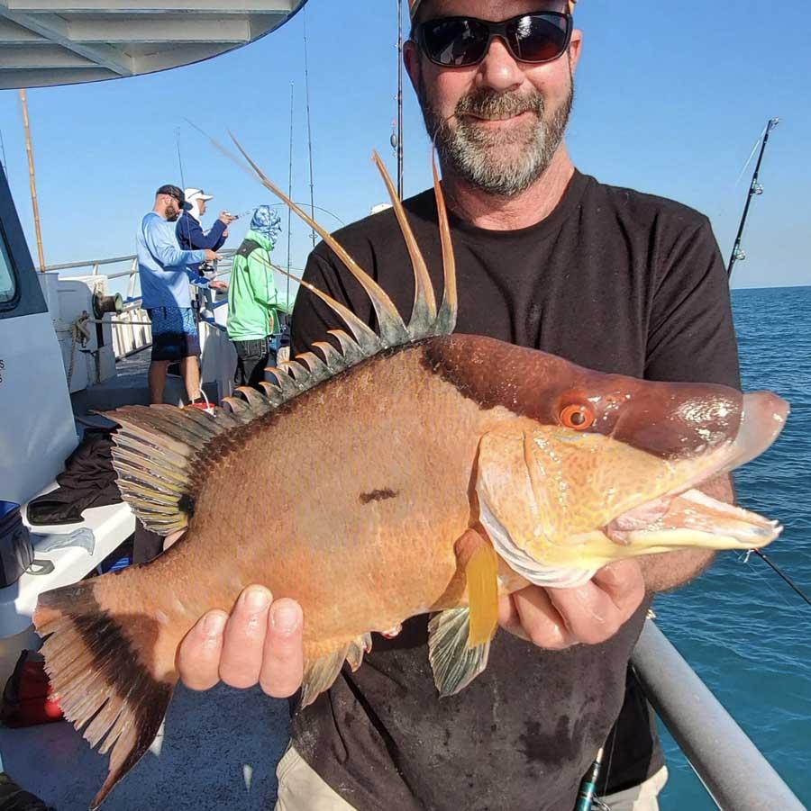 tampa nearshore hogfish