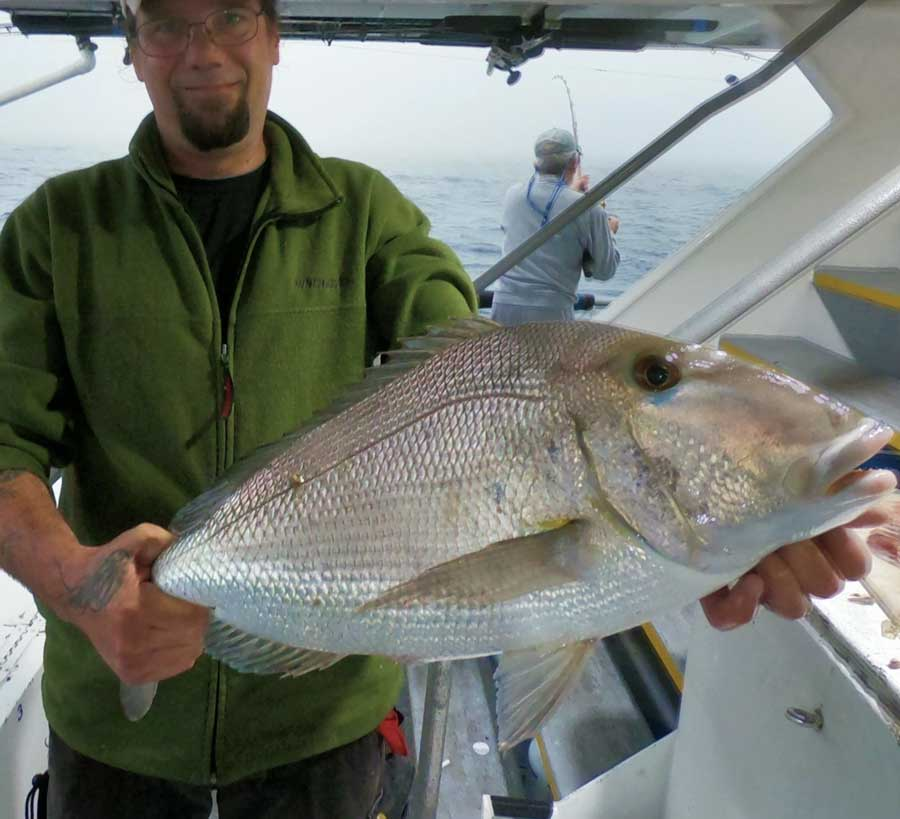 tampa offshore porgy