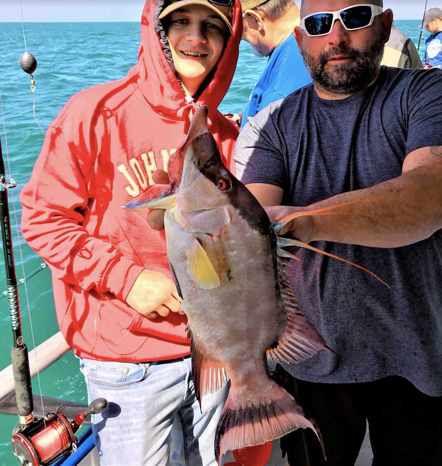 tampa hogfish